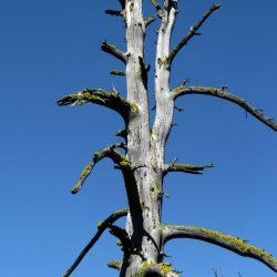 Погибщее дерево